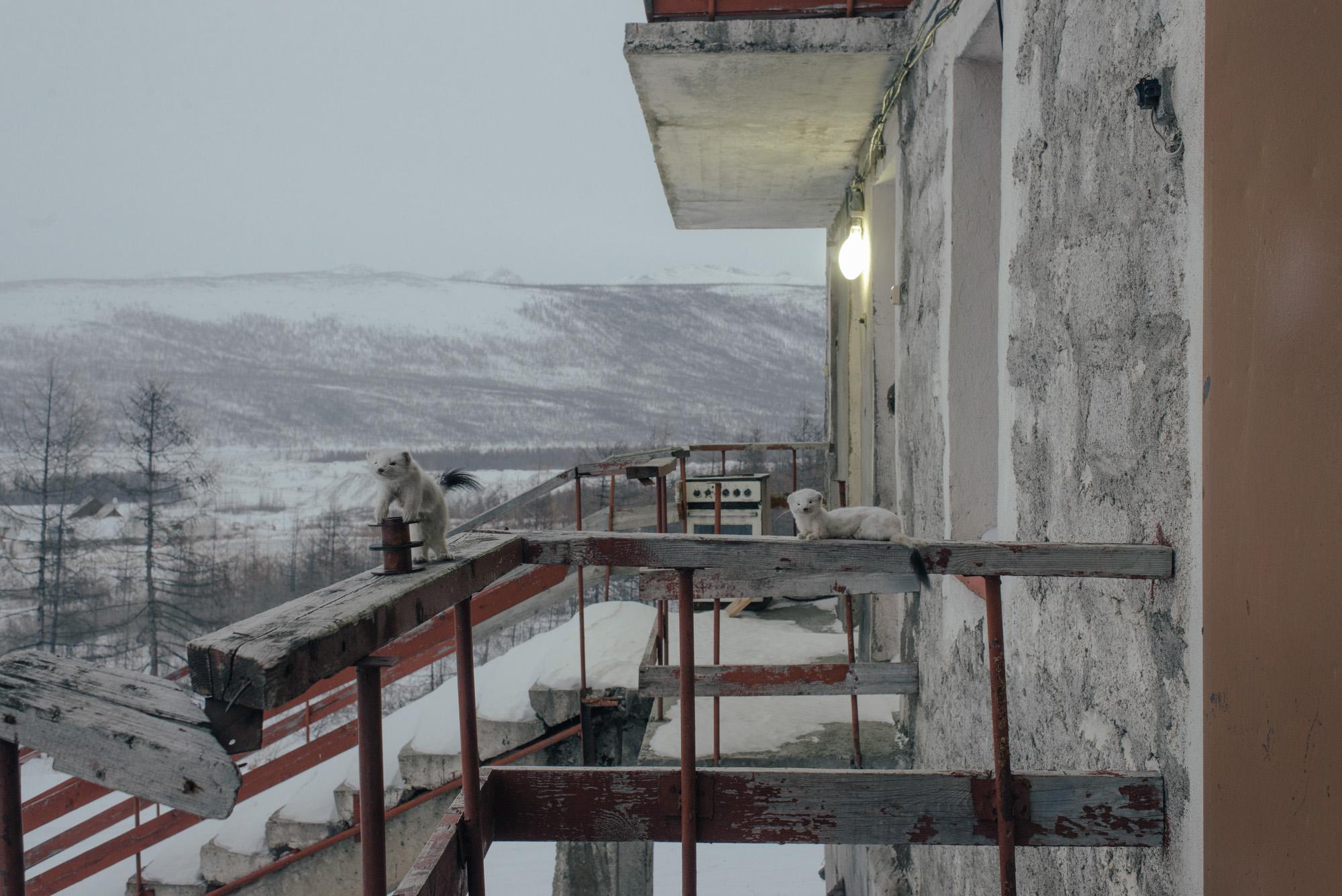Novovetrennii-044