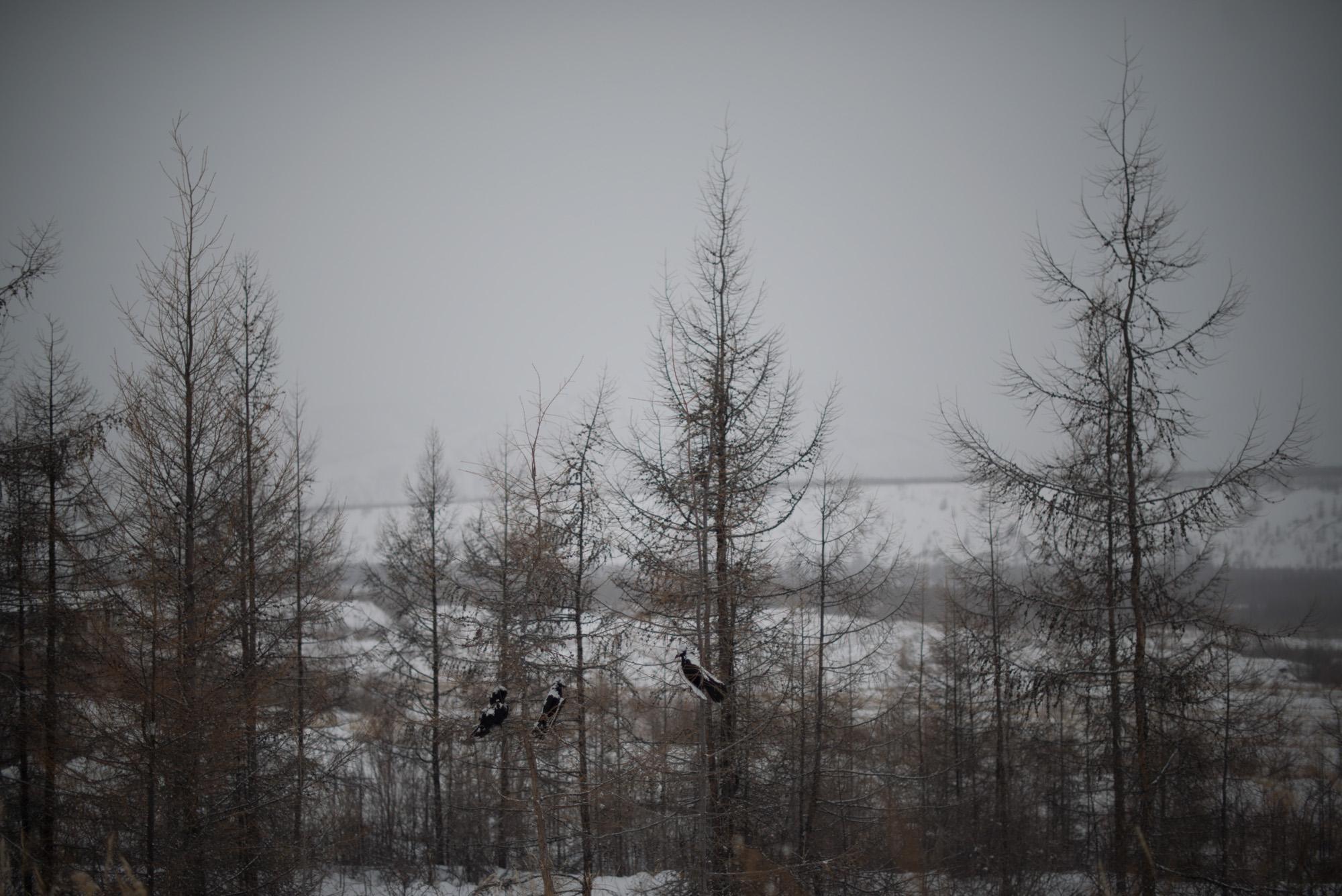 Novovetrennii-060